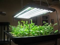 led grow images